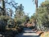 3Huntington.desert.garden.path