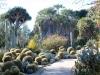 5Huntington.desert.garden