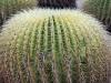 6barrel.cactus.close