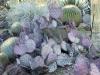 7cactus.purple.pads.Huntington