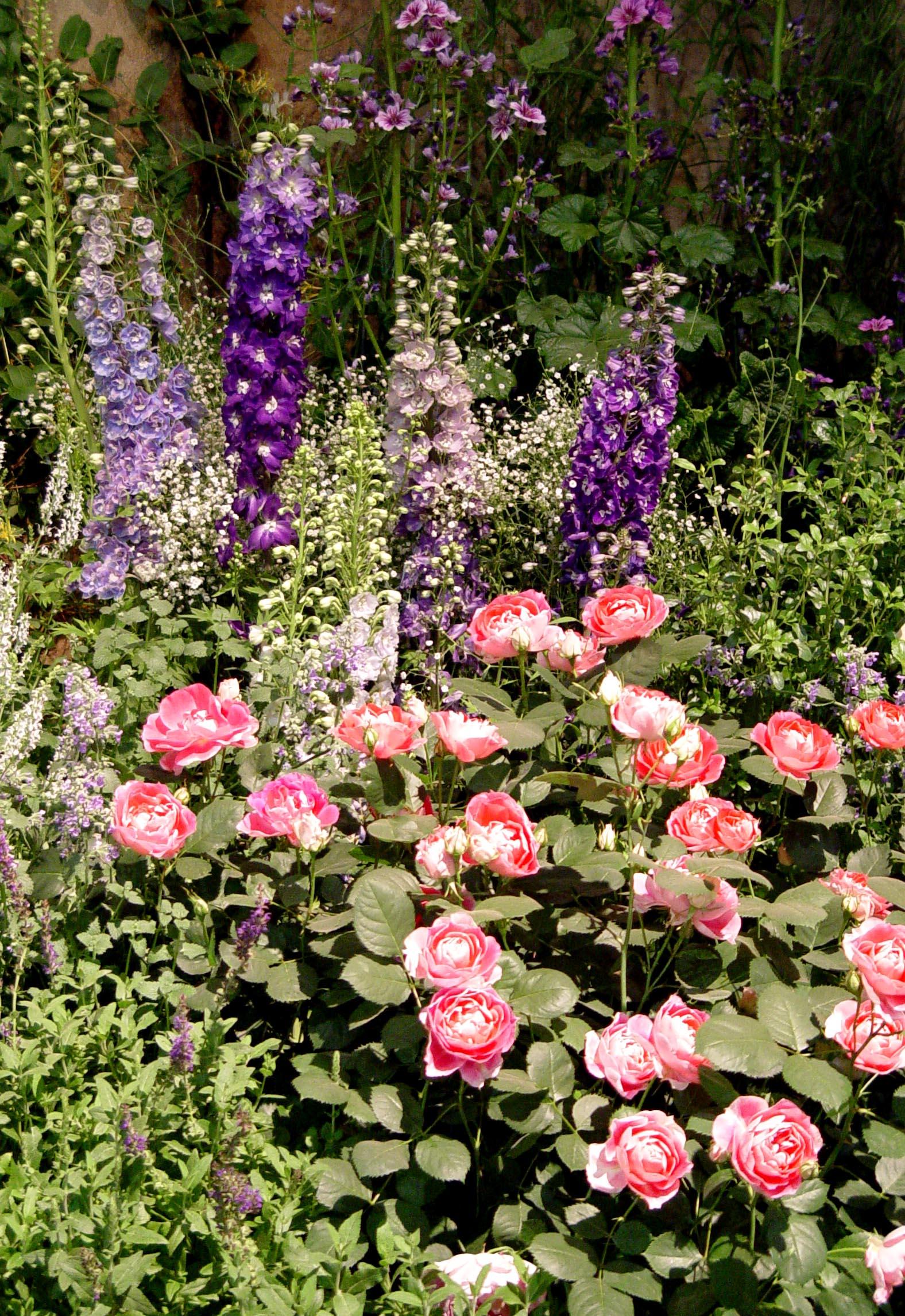 Roses In Garden: Nurturing The Gardening Gene