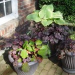 Perennials for Pots