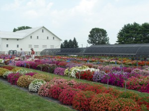 Penn State's Trial Gardens near Landisville, Lancaster County.