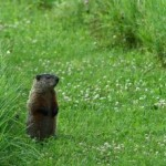 Groundhog Wars