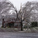 Ice Damage to Trees