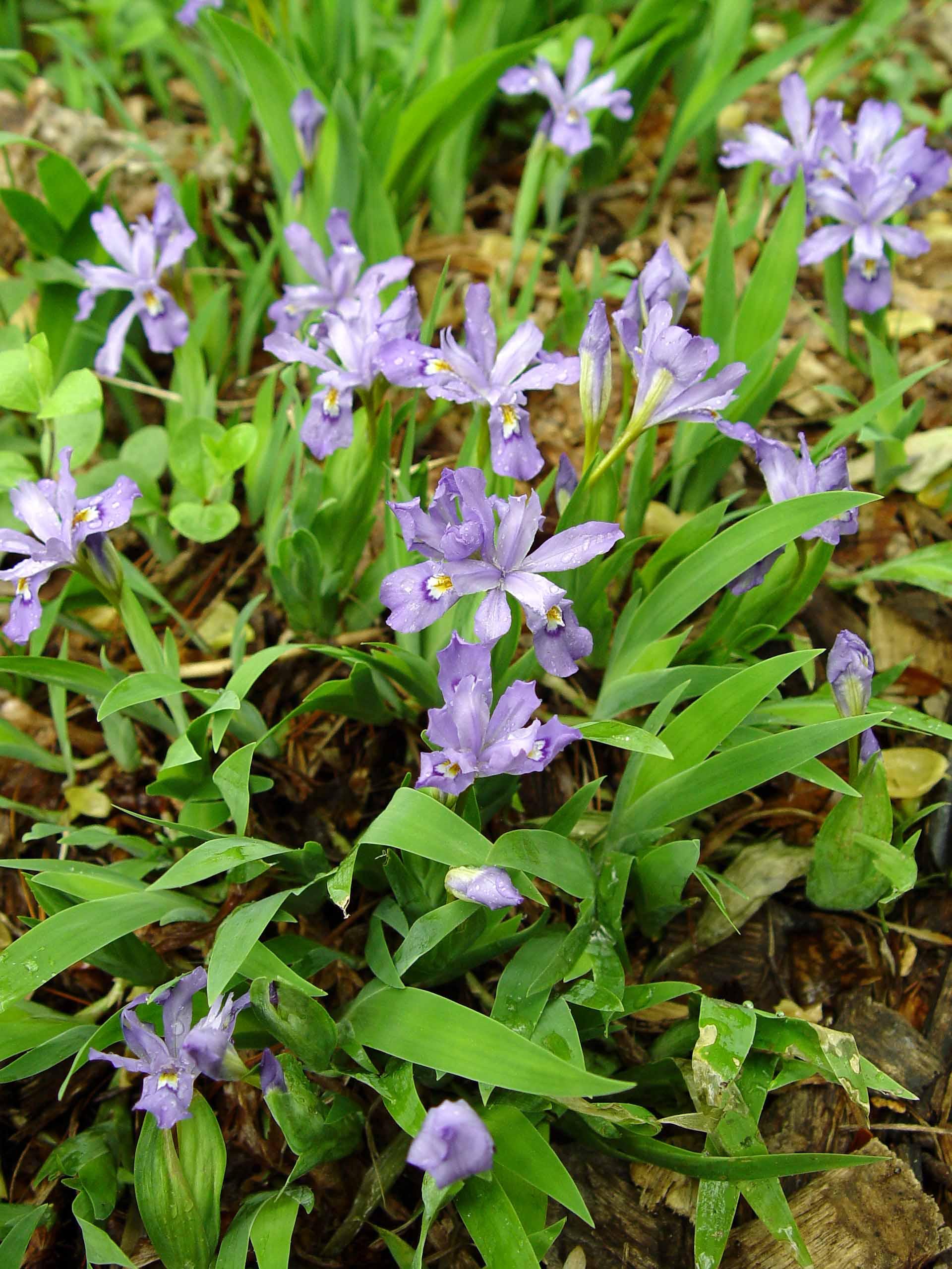Garden Housecalls - South-central Pennsylvania Native Plants