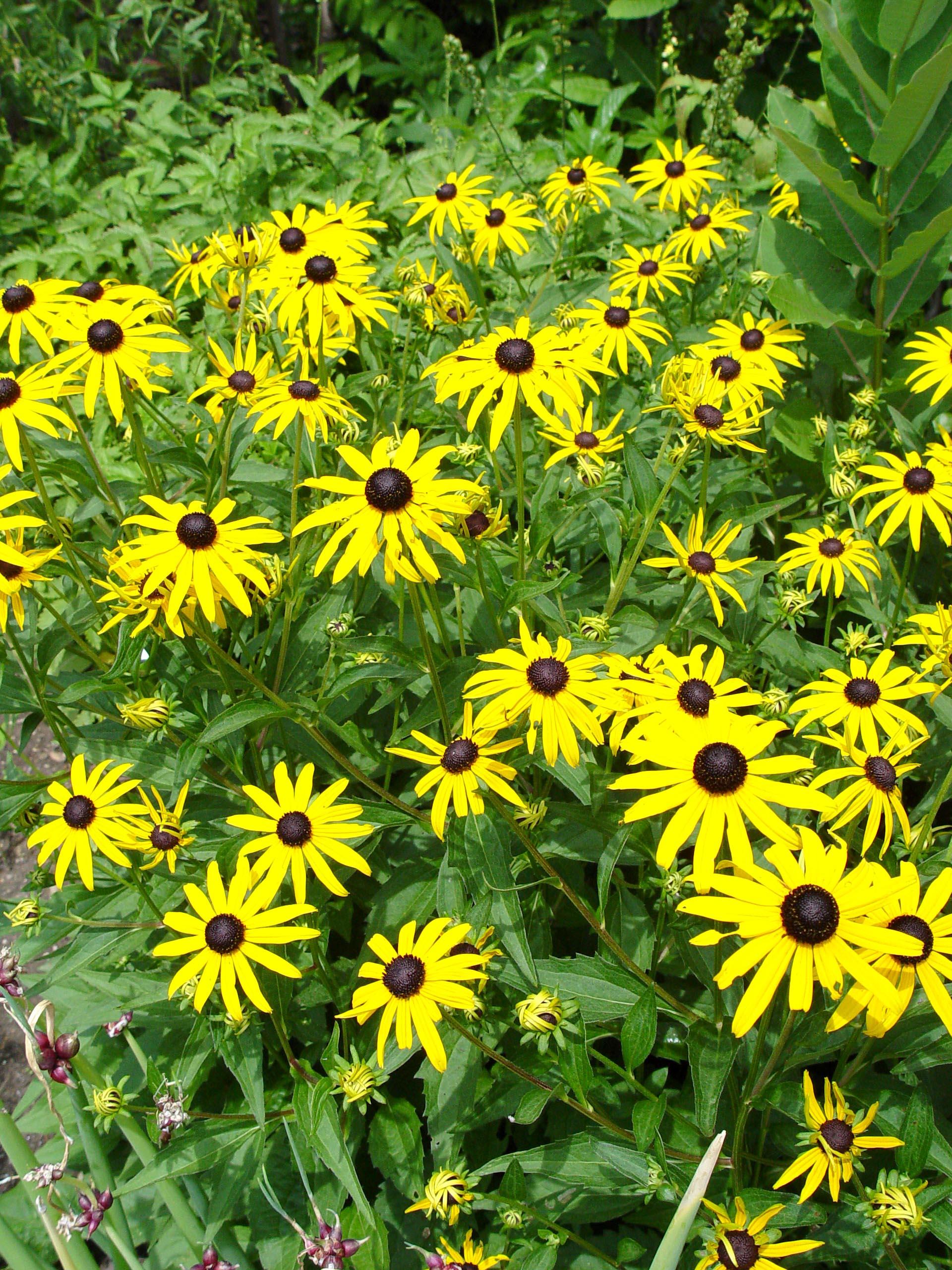 pa native plants