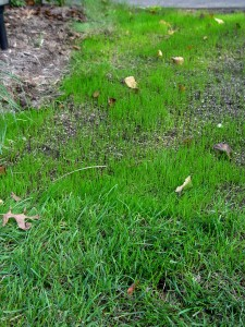 September is the year's best month to get new grass up and growing.