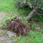 No wonder roots rot when saturated soil surrounds them.