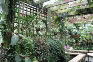Fuqua Orchid Center within Atlanta Botanical Garden.