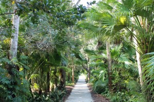 One of the many tropical paths leading through McKee Gardens.