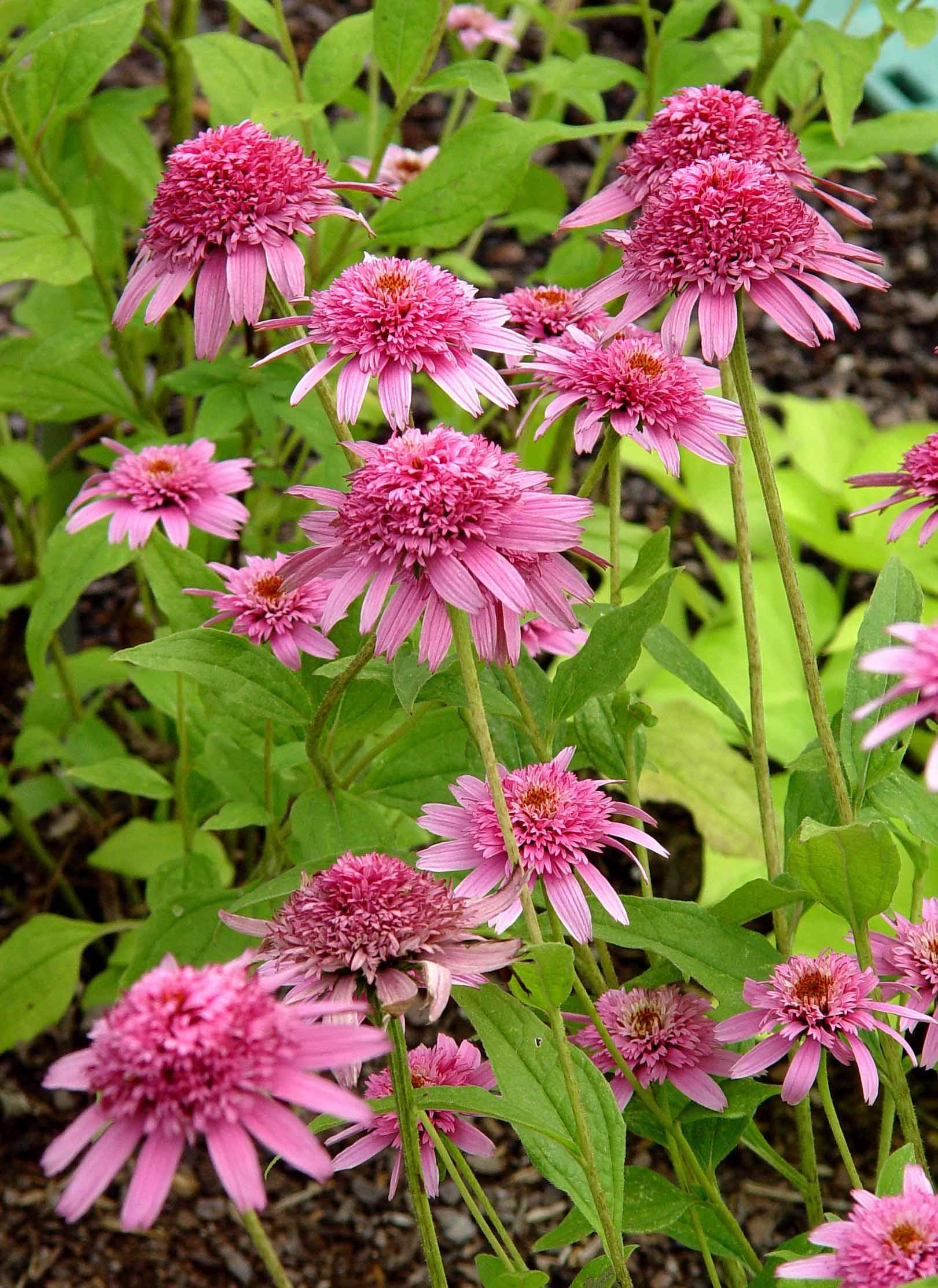 100 [ Mahoney U0027s Garden Center Houseplants ]