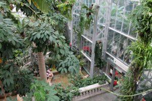 Rainforest section inside U.S. Botanic's conservatory.