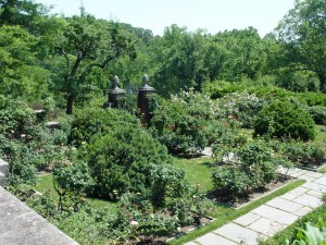 The Dumbarton Oaks rose garden from above.