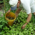 Pull Wet, Hoe Dry… and Poison Ivy