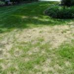 Fixing a dead lawn