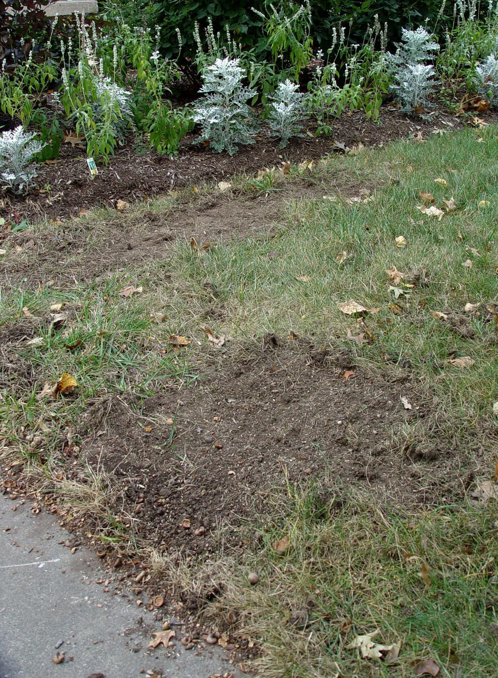 Fixing a dead lawn garden housecalls for Lawn topsoil