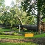 Wind-Battered Gardens