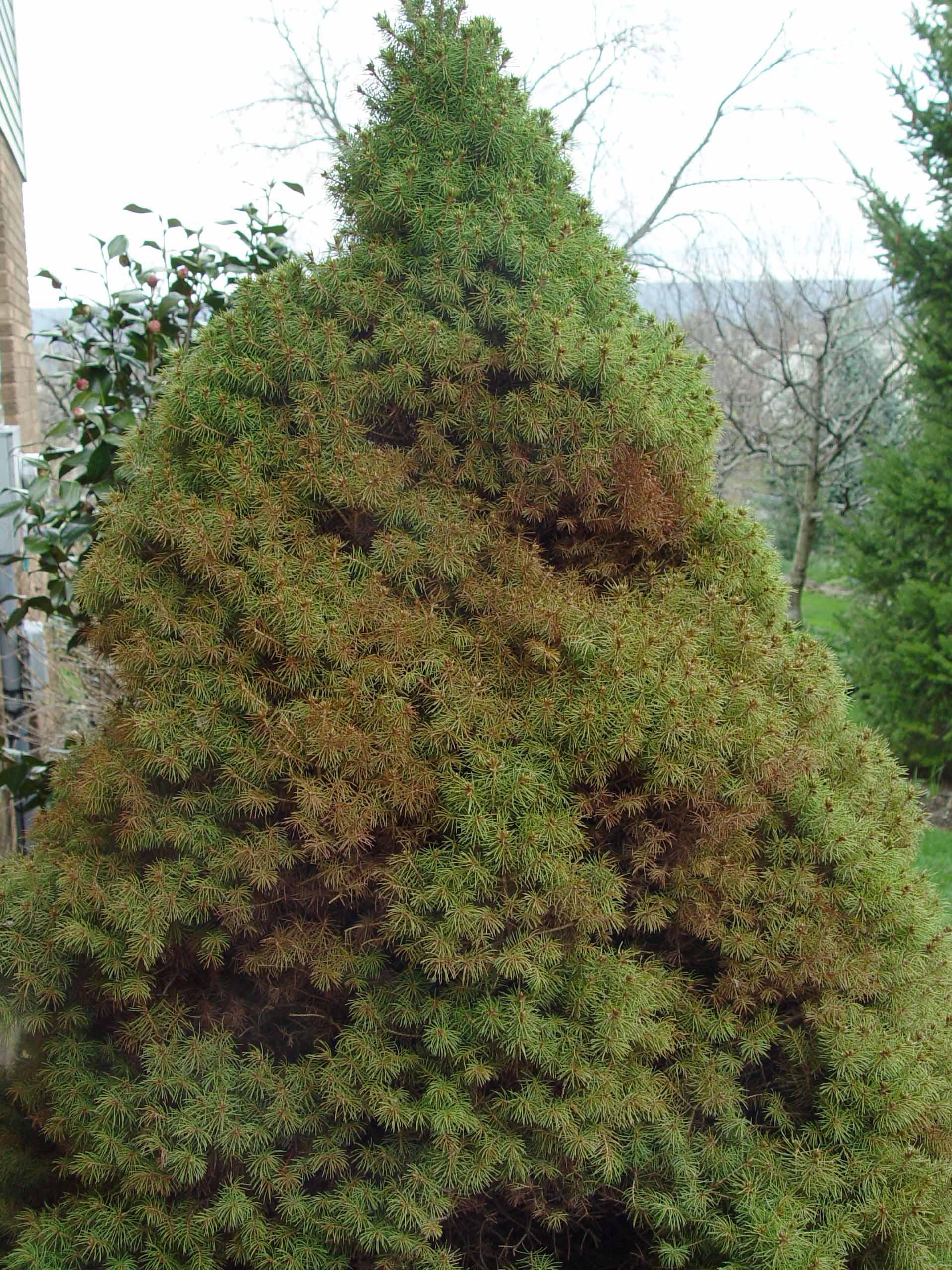 Garden Housecalls George S Not Favorites