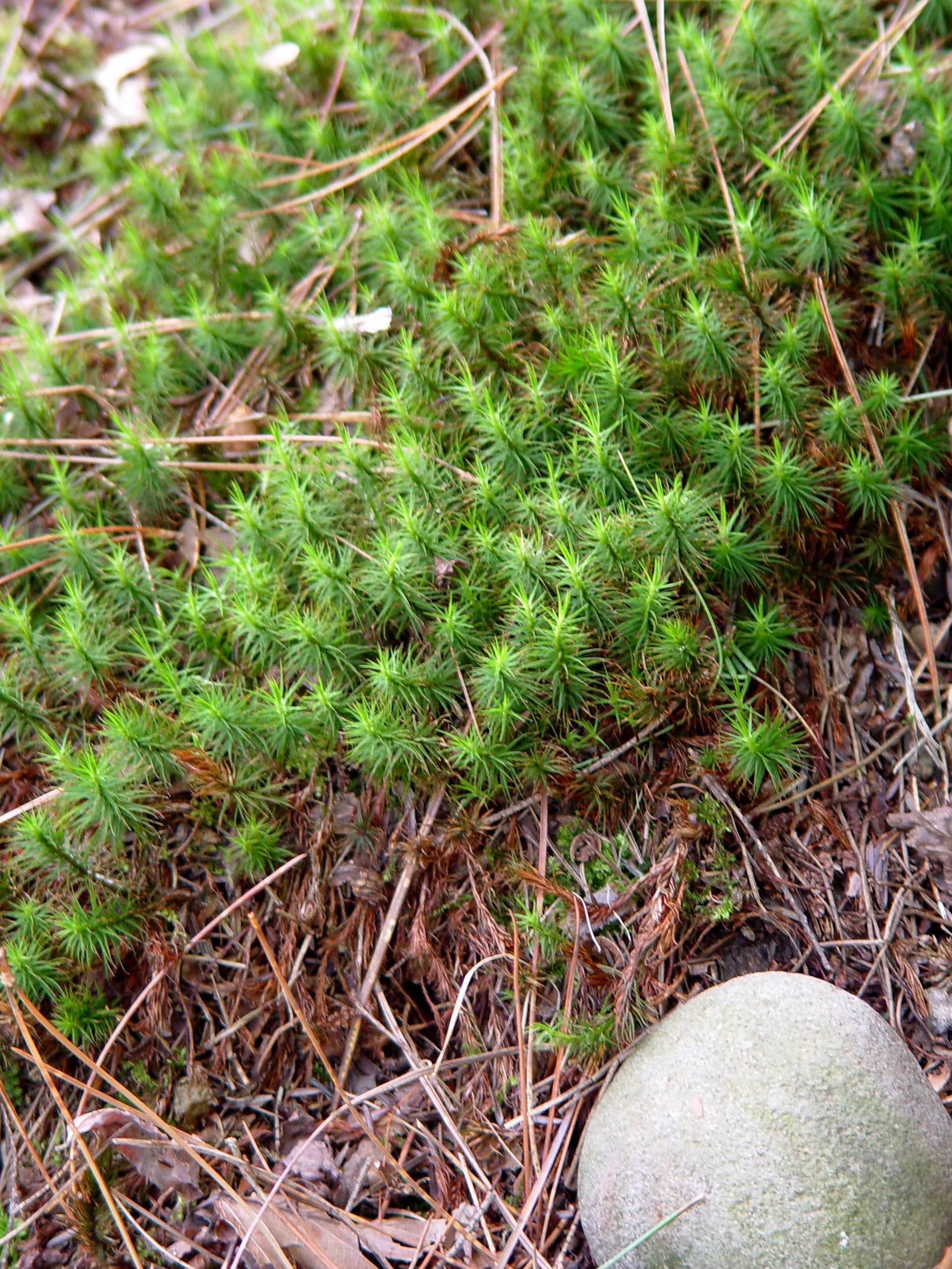 Garden Housecalls Should You Kill Moss