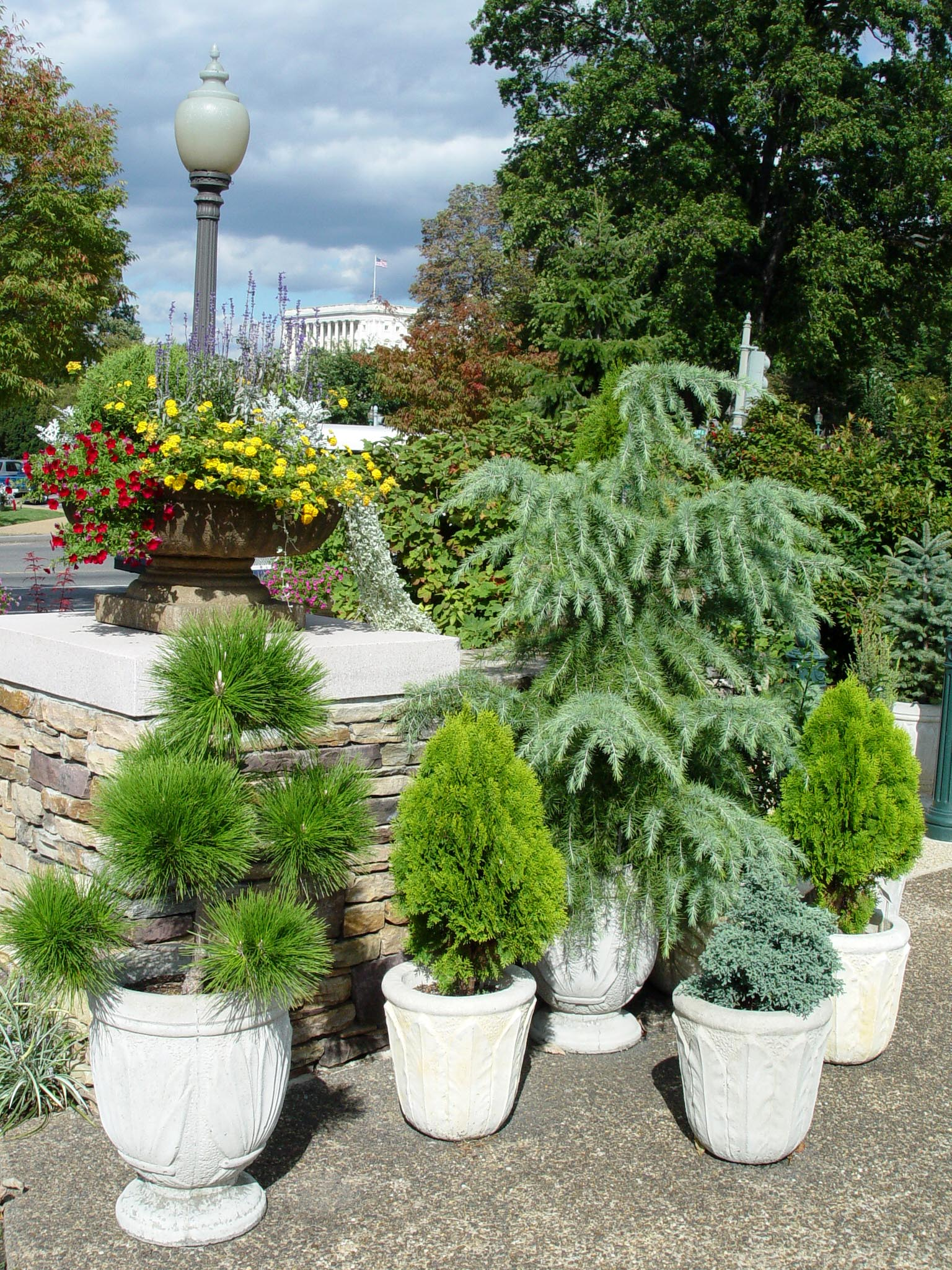 Trees in pots garden housecalls for Tall trees for small gardens
