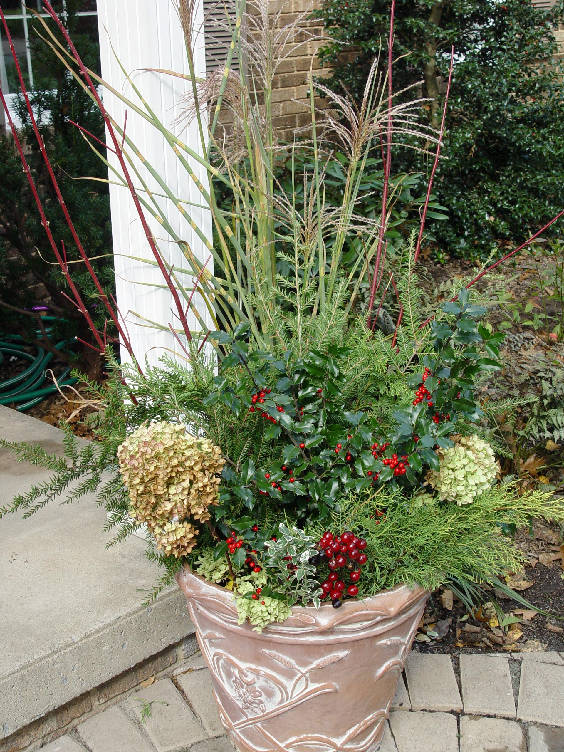Garden Housecalls Woody Plants In Pots