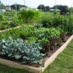 Free Money… and Help for a School Garden