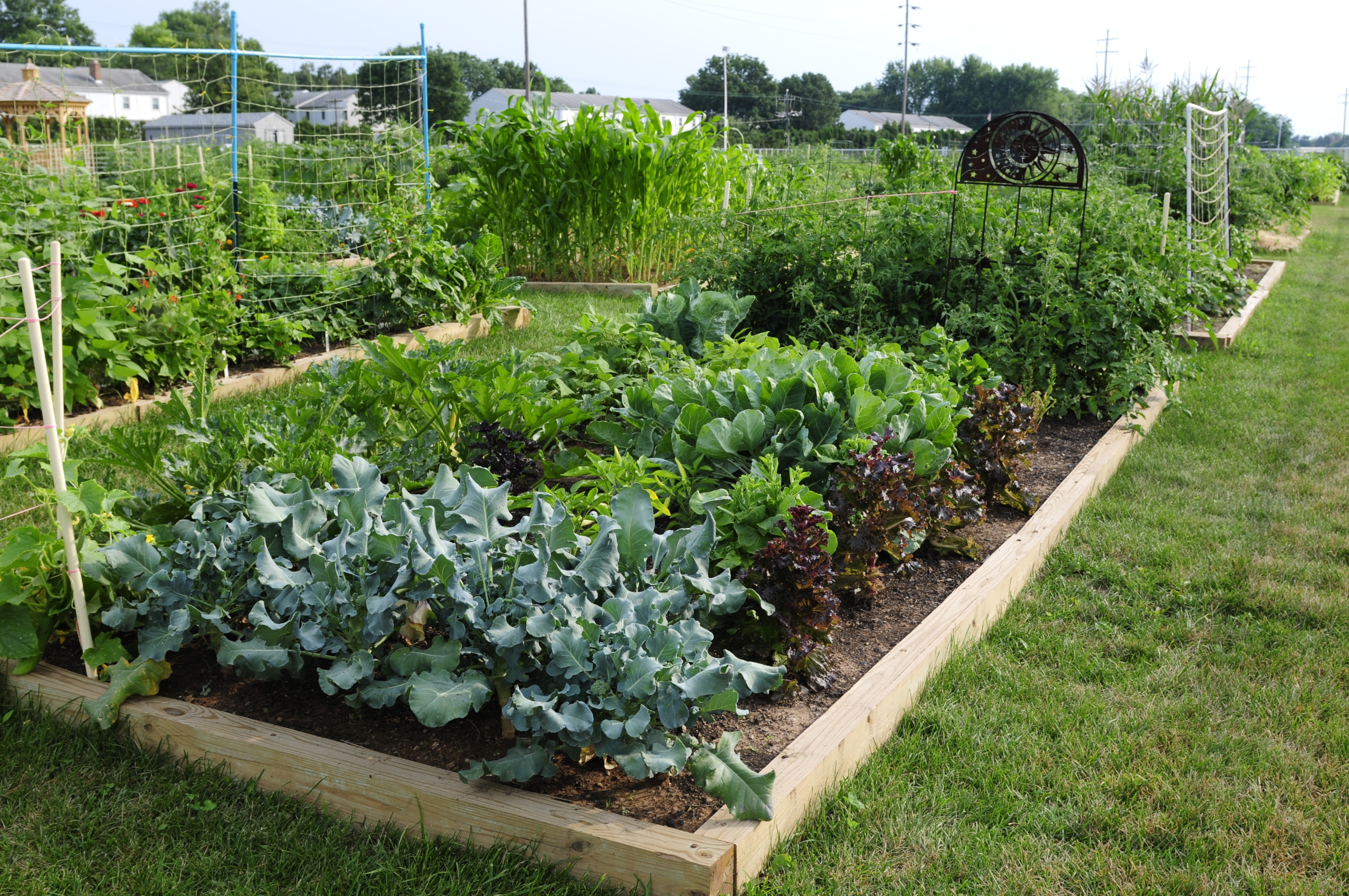 Free Money And Help For A School Garden Garden Housecalls: garden club program ideas