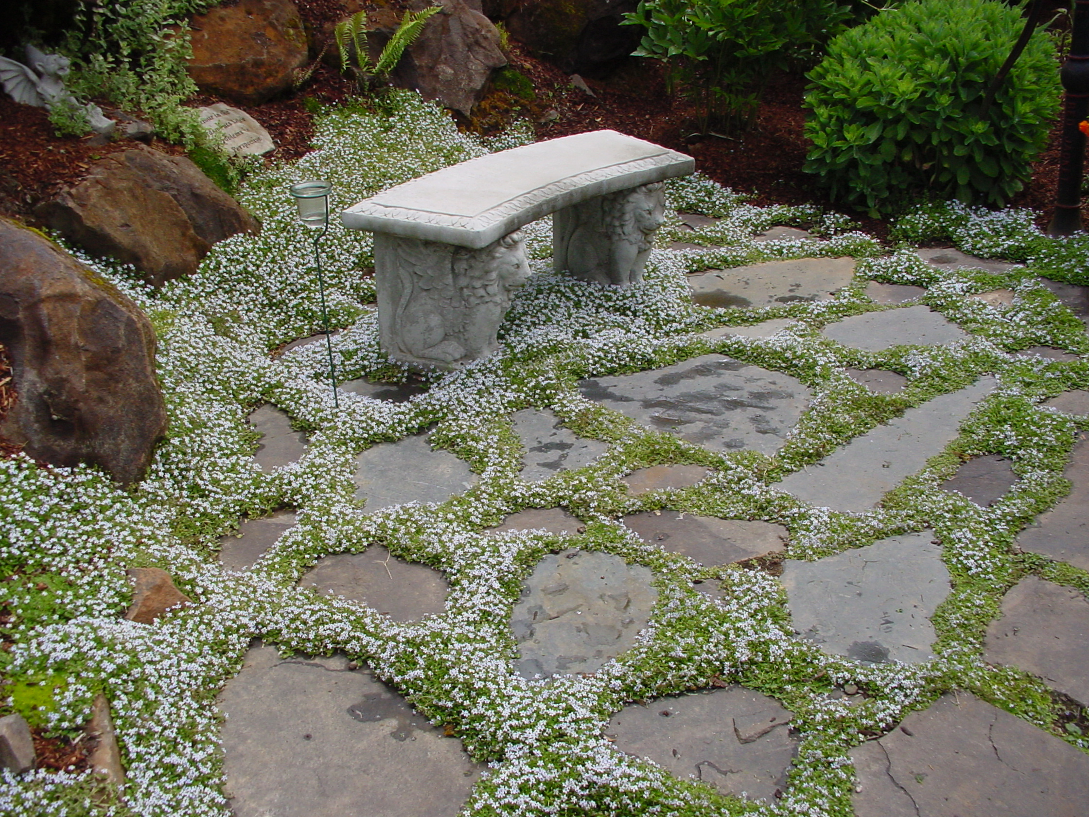 Contemporary Garden Ideas To Replace Grass Blue In Design Decorating