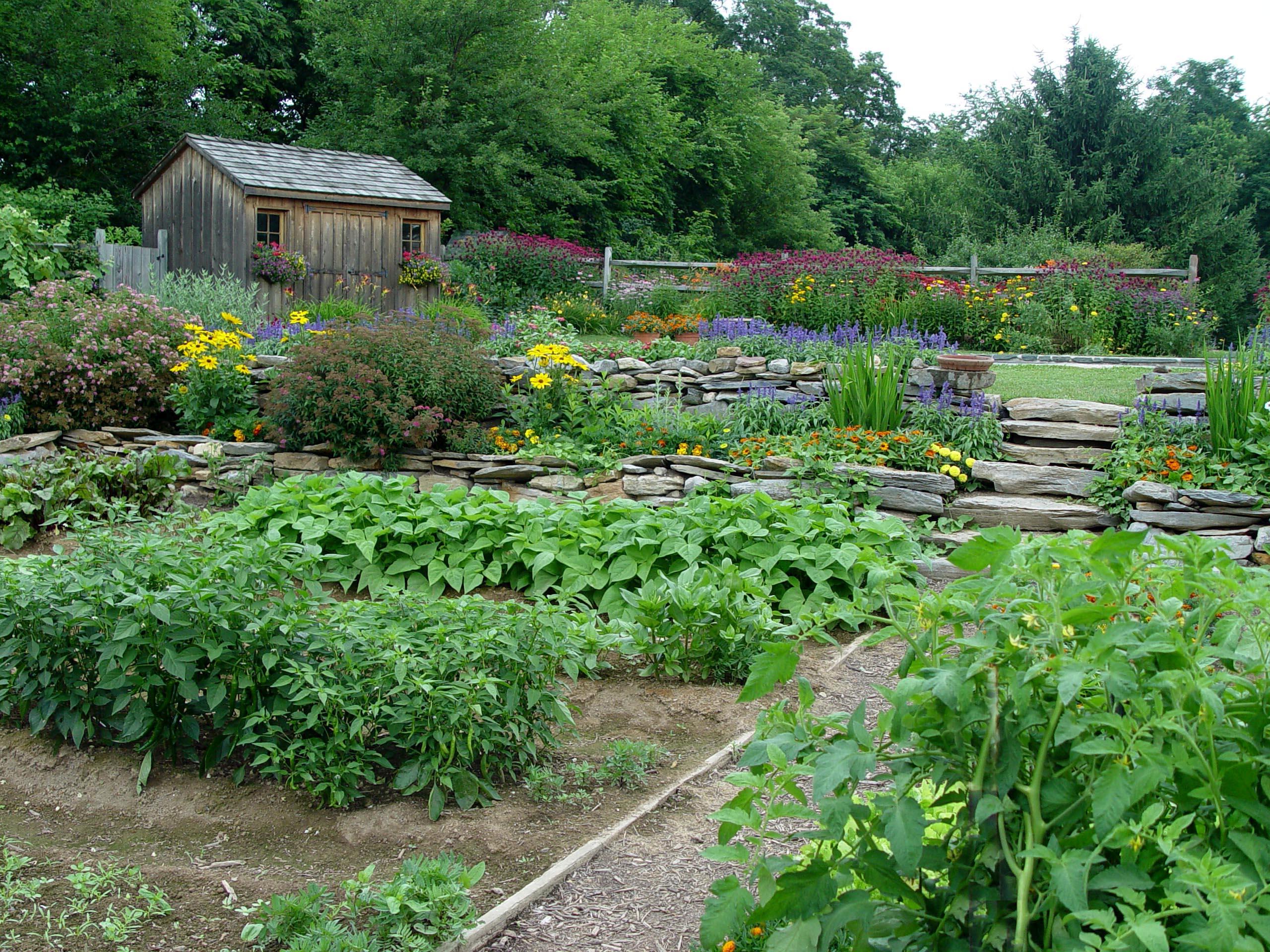 Good looking edibles garden housecalls for Ornamental vegetable garden design