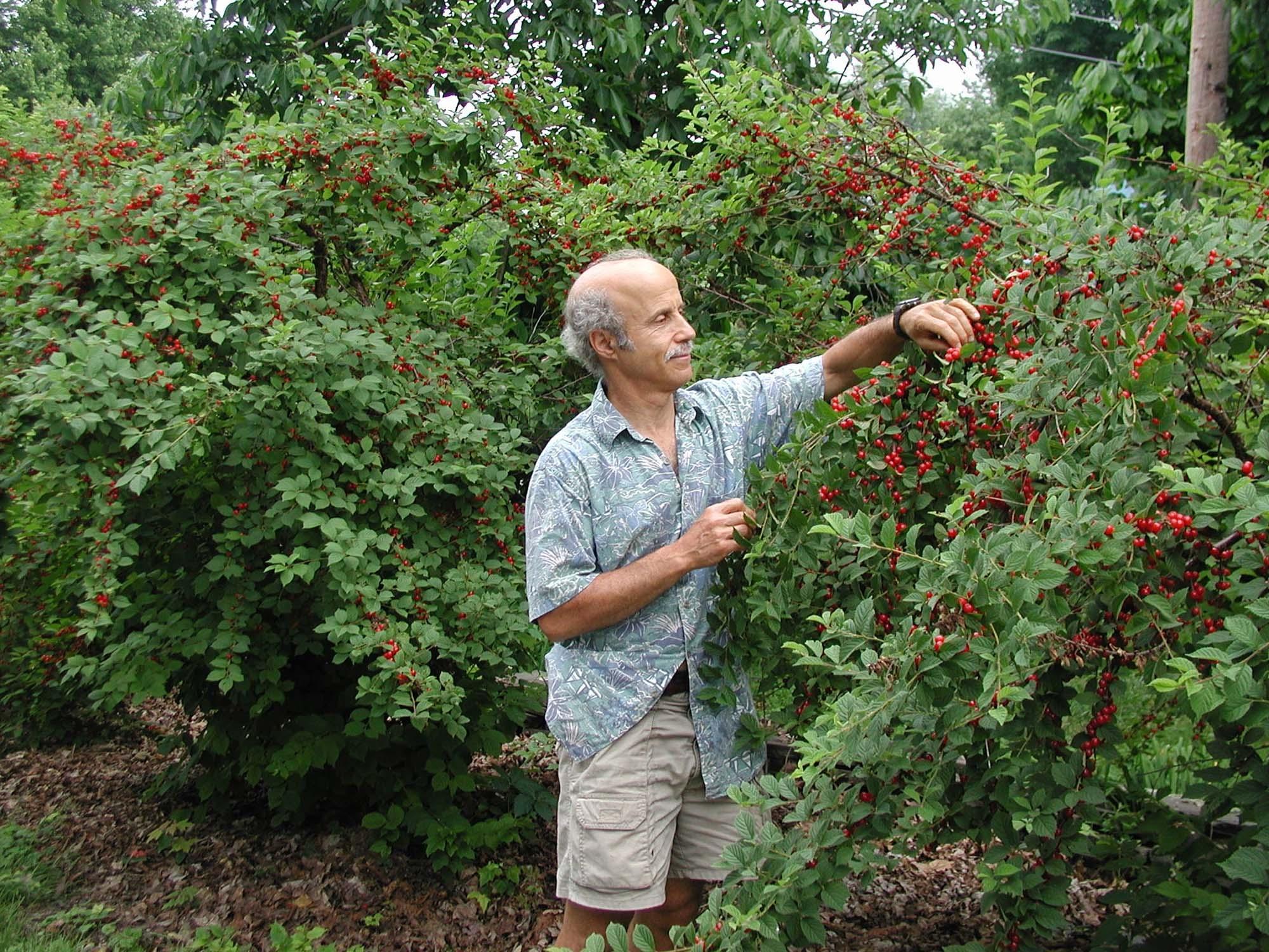 Fruits You Can Actually Grow At Home Garden Housecalls
