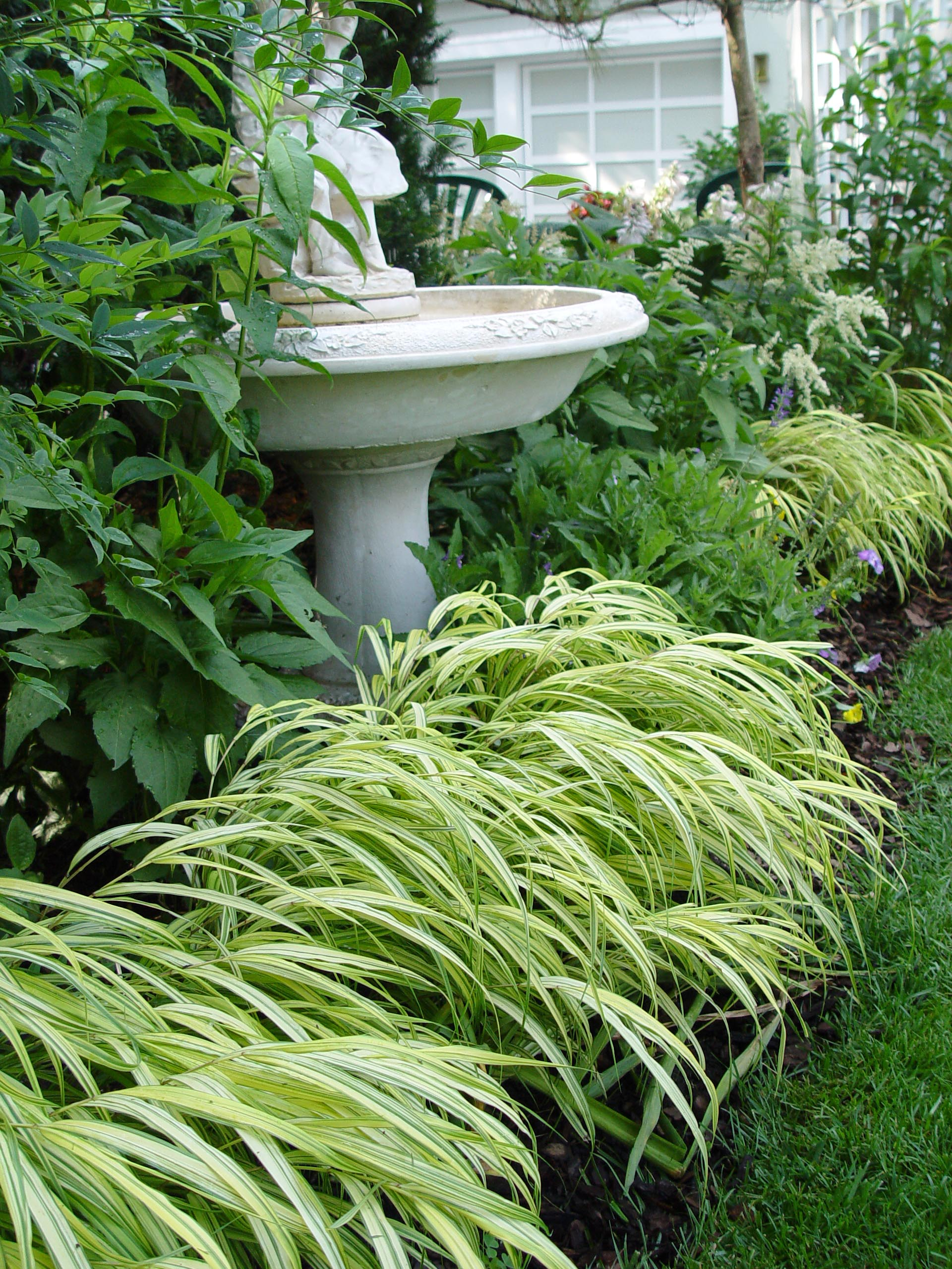 Garden oscars garden housecalls for Short variegated grass