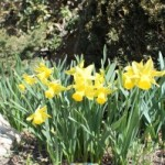 Did spring sprung?