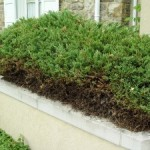 Hedge Edge