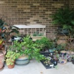 Make Your Own Free Plants