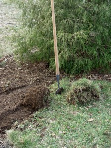 Sod pieces, stripped by hand and rolled in manageable sizes.