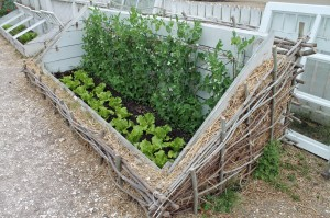 A Colonial coldframe insulated by straw.