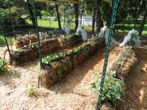A garden of straw bales... no soil needed.