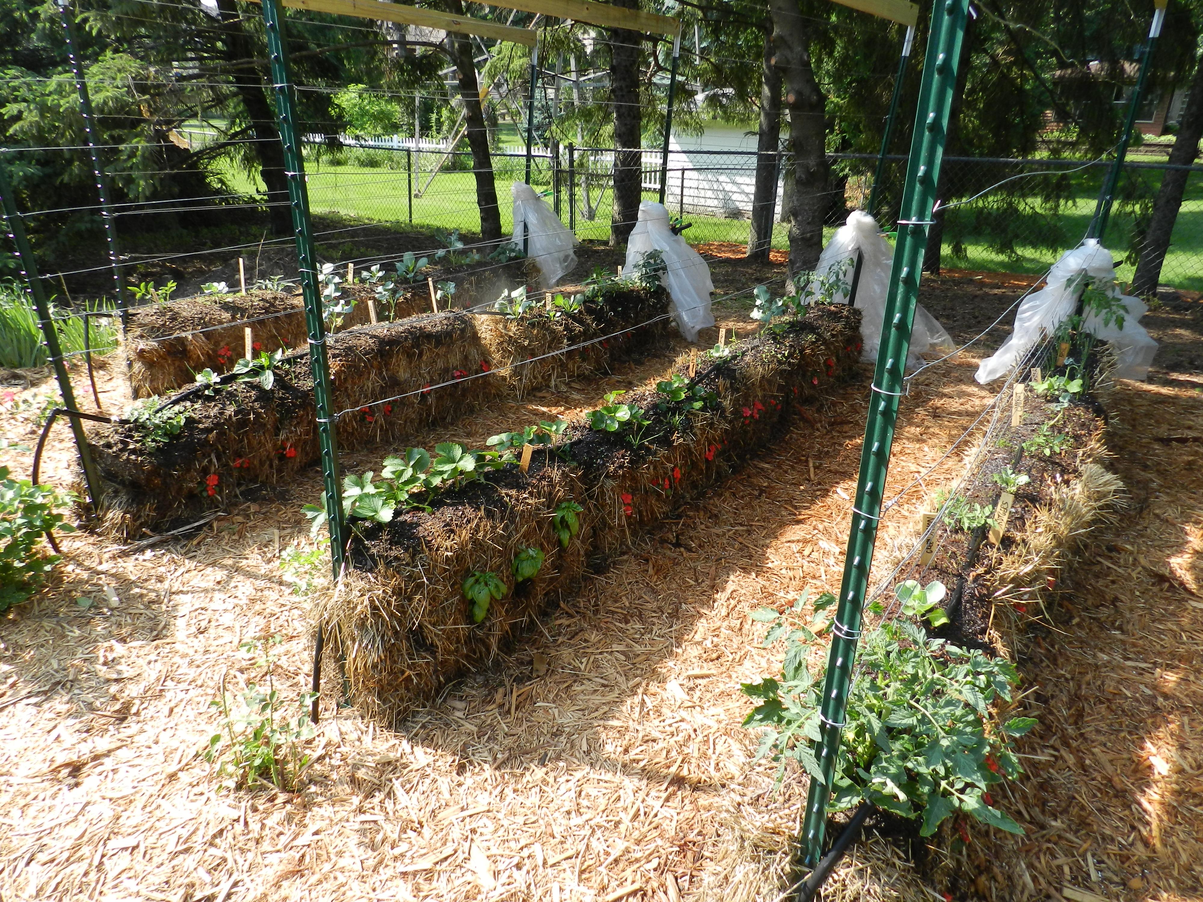 Gardening in straw garden housecalls for Backyard soil