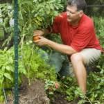 Gardening in Straw