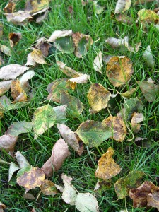 How dare these leaves mess up the lawn!