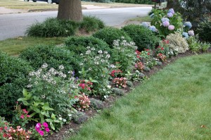 """My front bed of annuals, planted in a sort of """"meadow"""" way."""