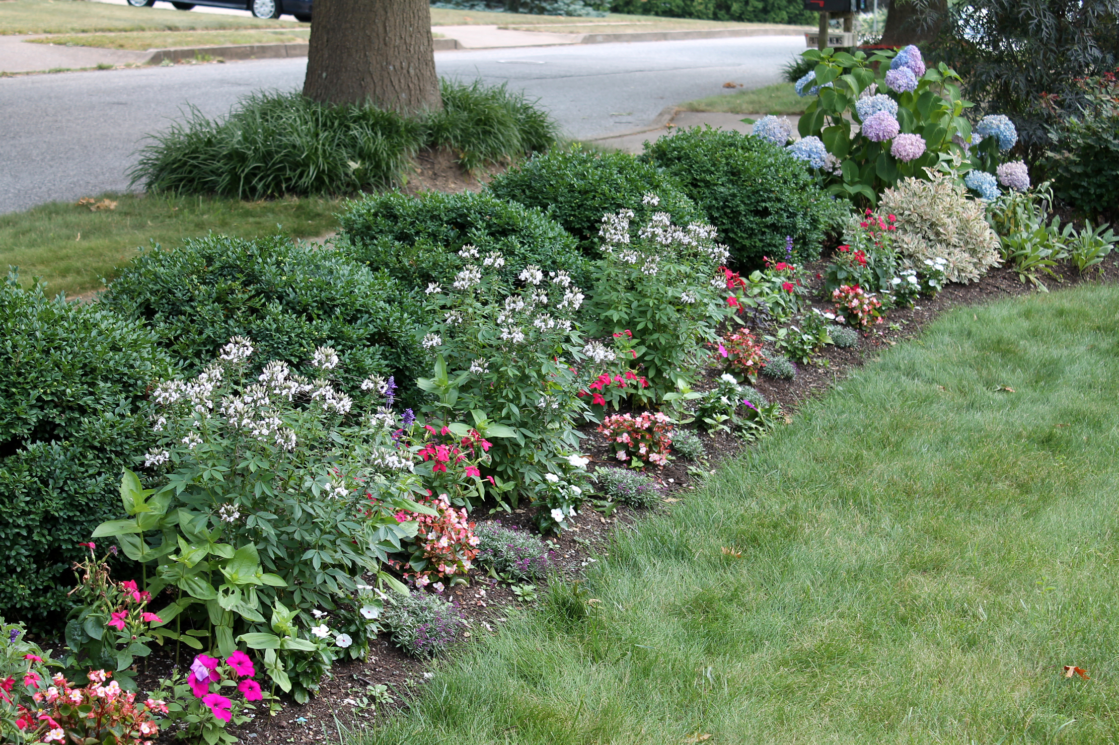A meadow of annual flowers garden housecalls my front bed of annuals planted in a sort of meadow izmirmasajfo