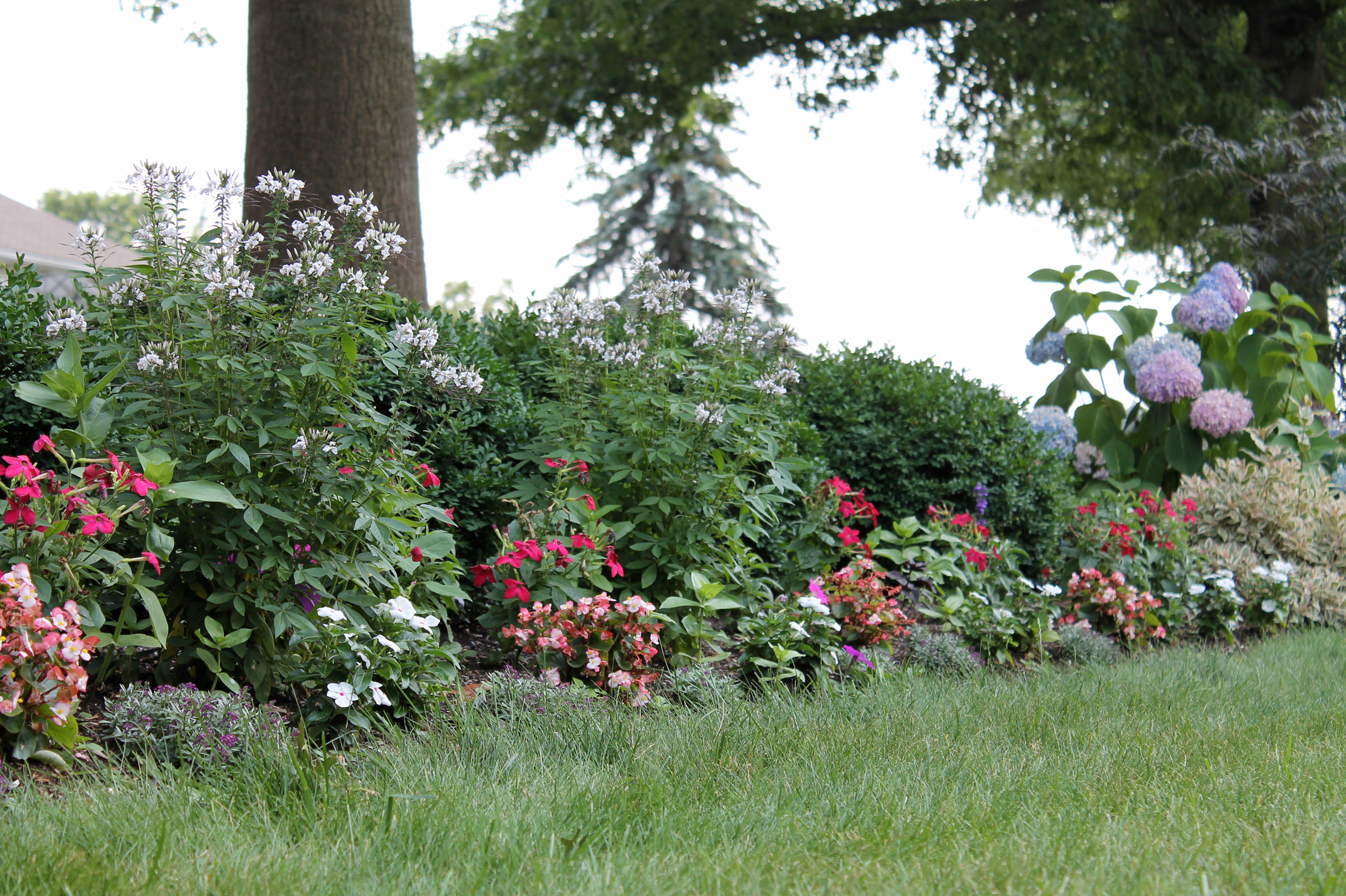 A meadow of annual flowers garden housecalls put together combos and repeat them izmirmasajfo Choice Image