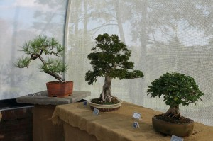 "The Susquehanna Bonsai Club display in Hershey Gardens' Butterfly House. Notice the shadow of the ""real"" trees outside through the mesh covering."