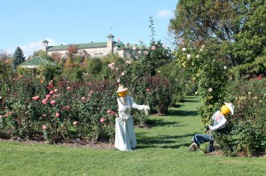 Roses still blooming away in late October at Hershey Gardens.