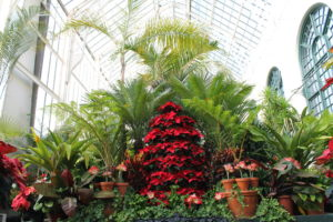Biltmore's Conservatory decorated for Christmas.