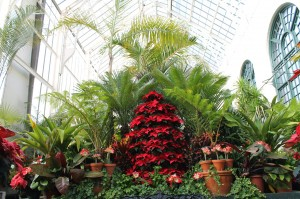 Inside Biltmore's Conservatory at Christmas.