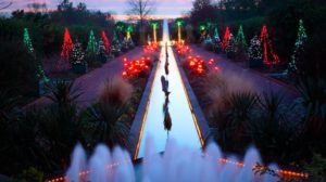 Some of Daniel Stowe Botanical Garden's Christmas lights.