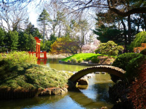 The Japanese Garden at Brooklyn Botanic Garden.